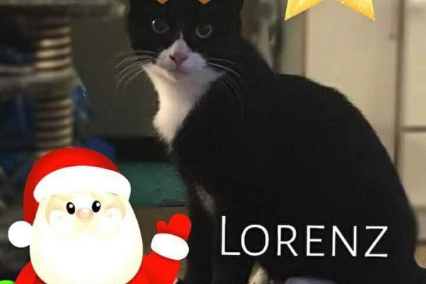 Lorentz - 15.12.17