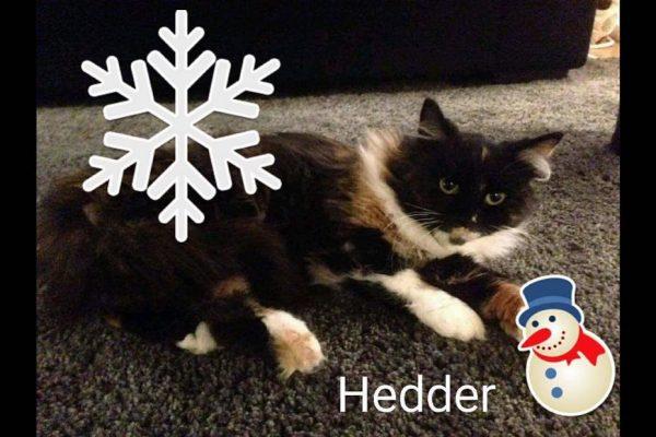 Hedder - 06.12.17